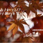 【保存版】ワード(Word)でサクサク年賀状文面の作り方