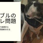 愛犬のトイレ問題をしつけることなく簡単で画期的に解決する方法-marusblog